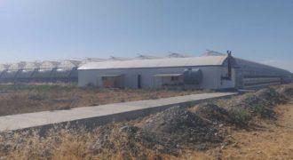 Сельскохозяйственный производственный комплекс